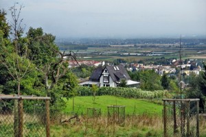 Panorama Brombeerweg